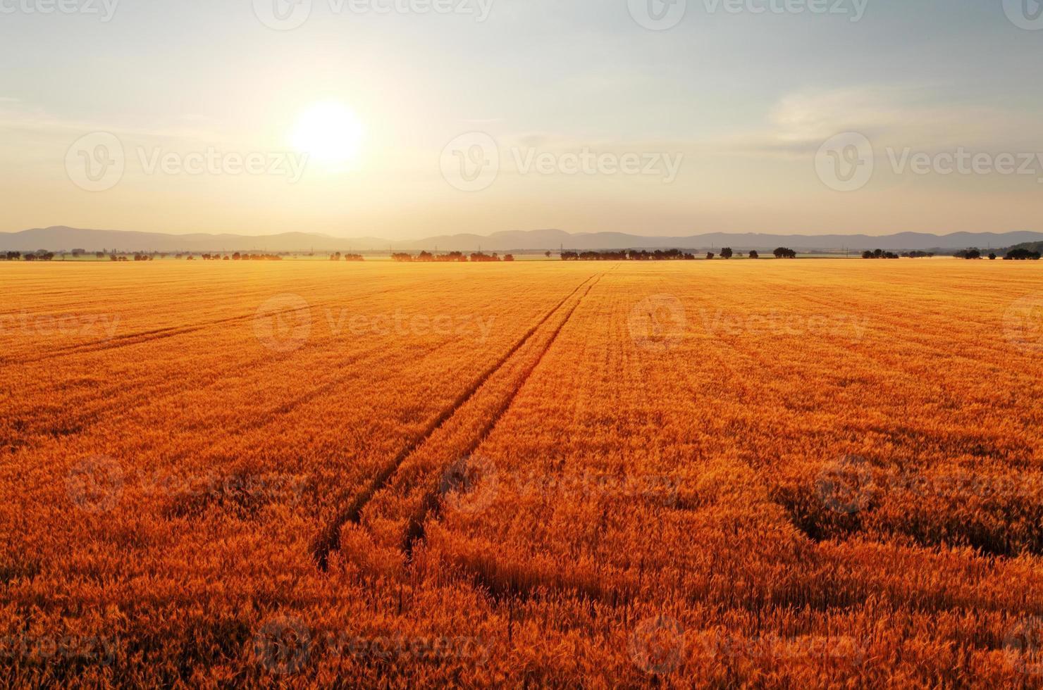 paysage rural à l'aube avec le soleil sur les champs. photo