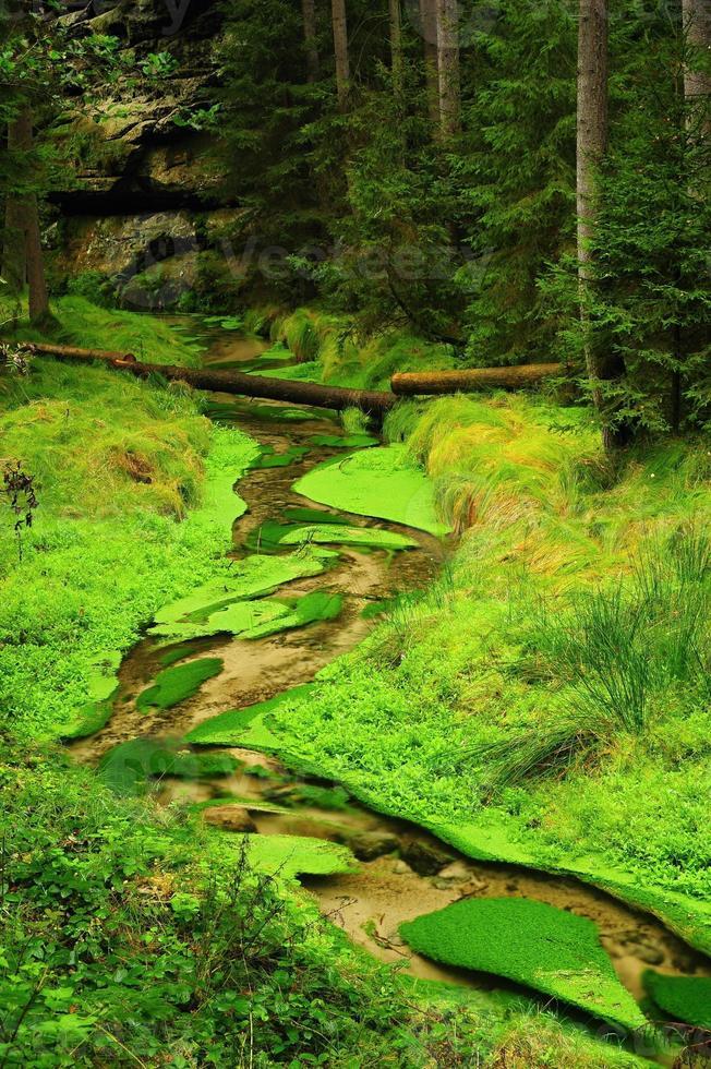 petite rivière photo