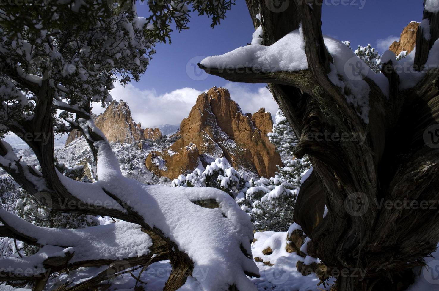 jardin de neige fraîche encadrée par des genévriers photo