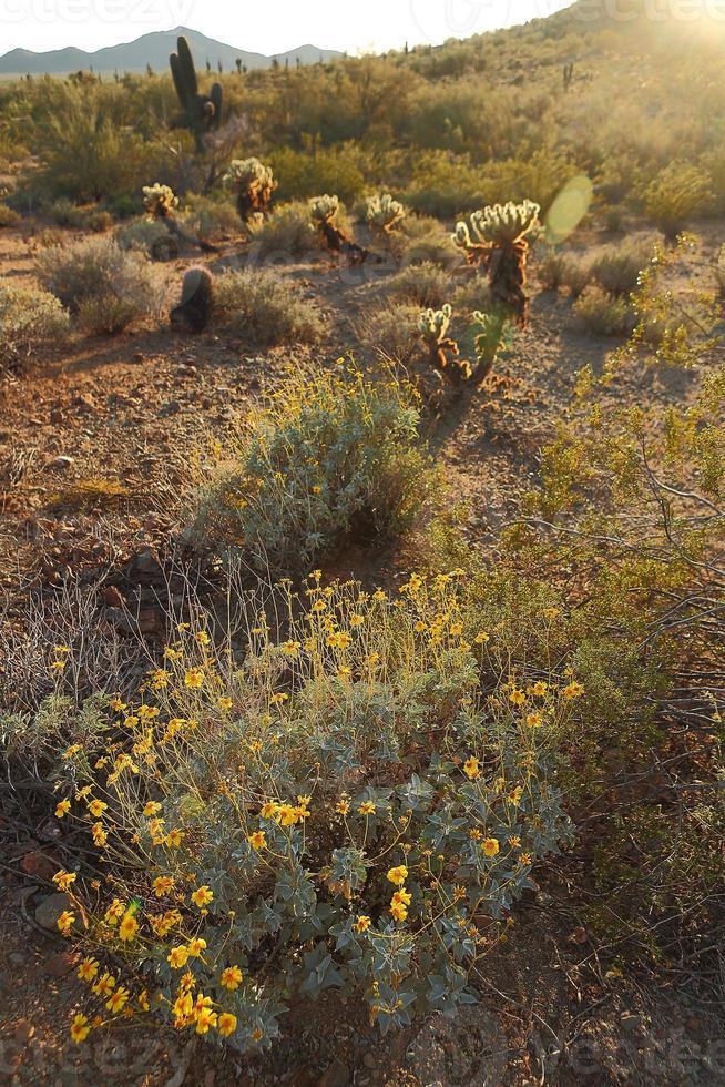 paysage du sud-ouest du désert photo