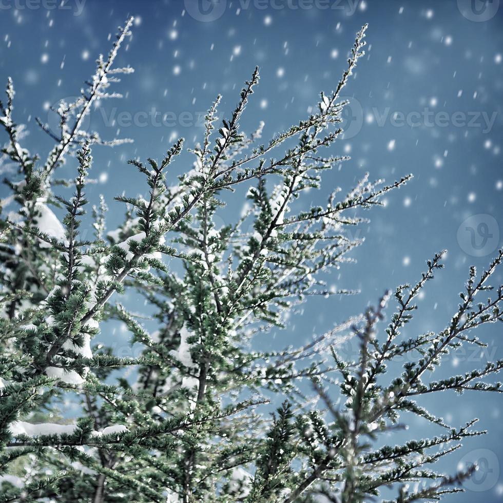 beau fond d'hiver photo