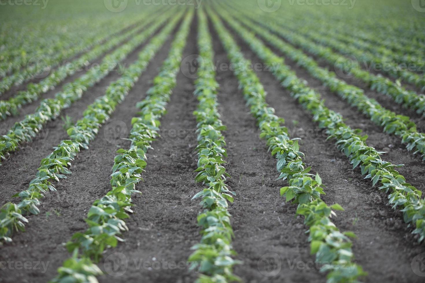 rangées de semis à la ferme photo