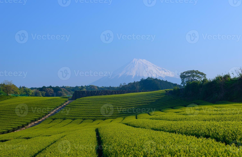 mt.fuji et plantation de thé photo