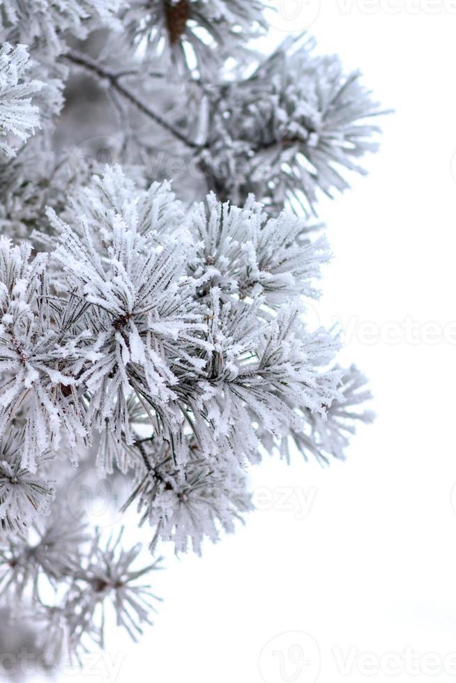 fond de vacances d'hiver. photo