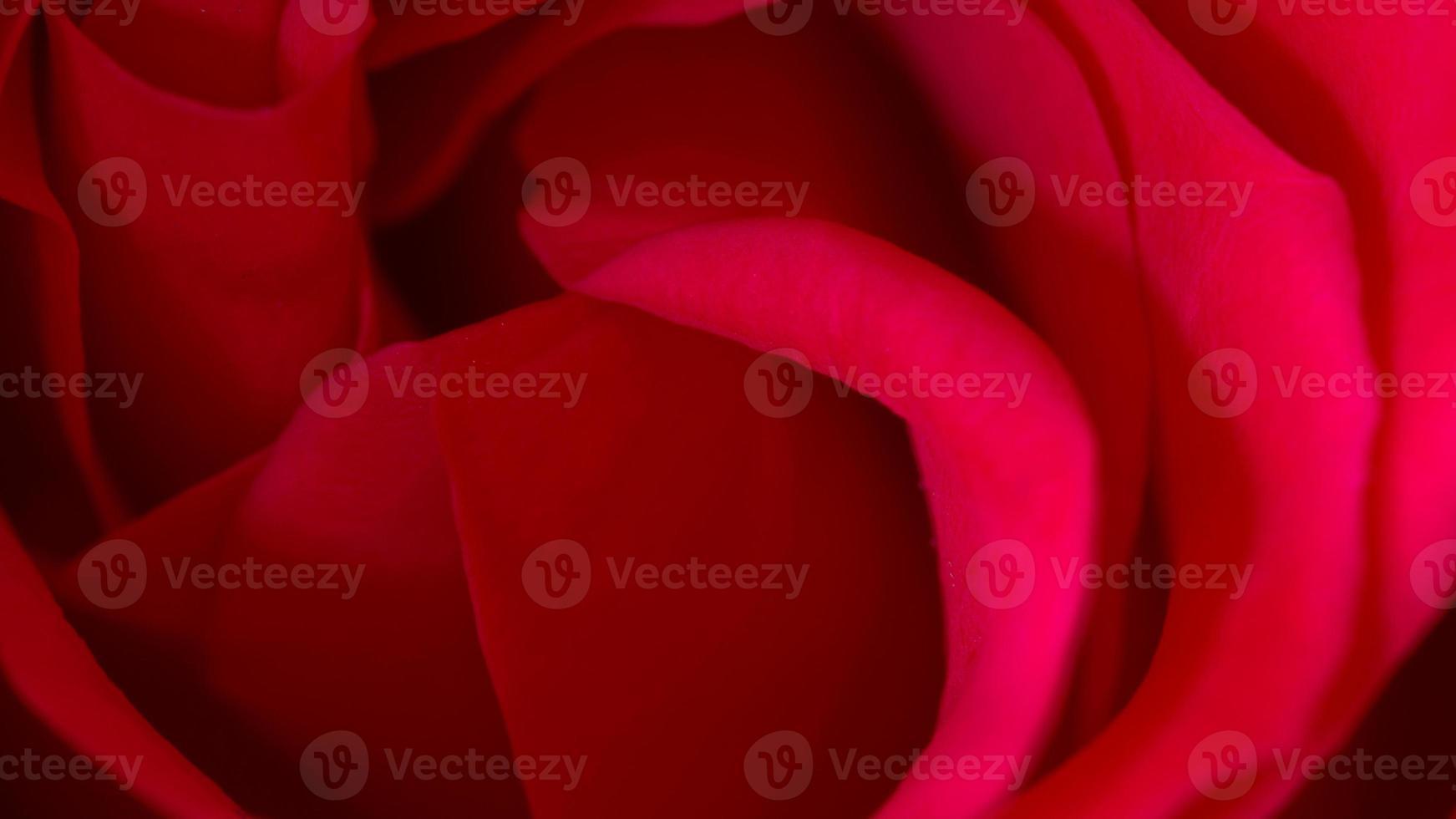 Rose rouge macro gros plan photographie symbolique de l'amour et de la compassion photo