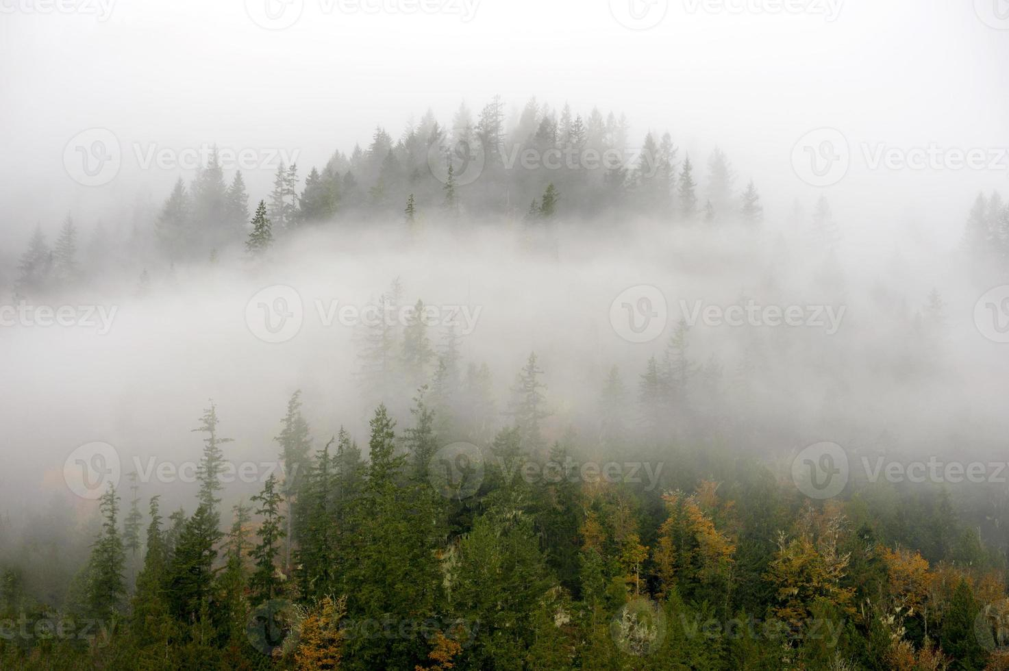 l'automne dans le nord-ouest. photo