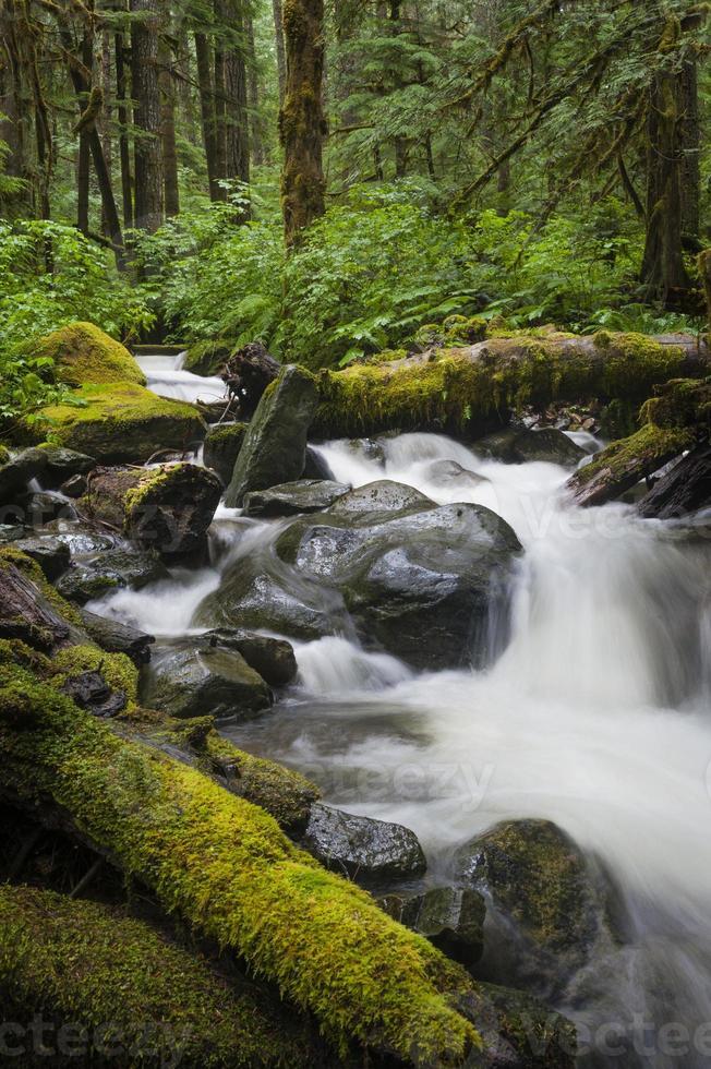 ruisseau de la forêt tropicale photo