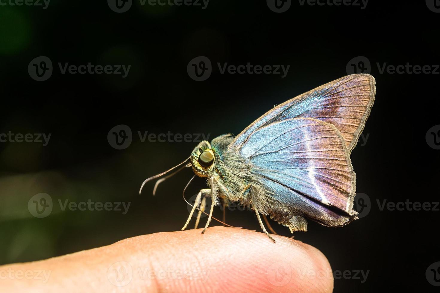 papillon. interdiction de camping krang photo