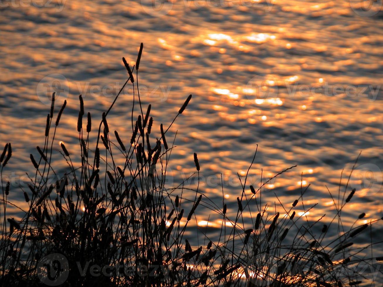 silhouettes au coucher du soleil photo