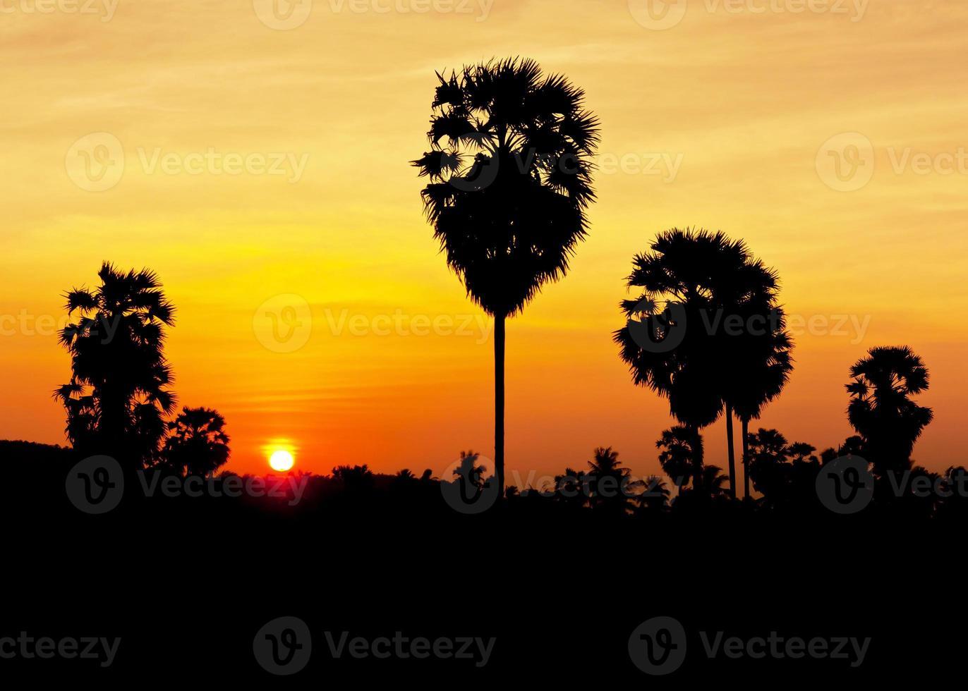 plam avec coucher de soleil photo