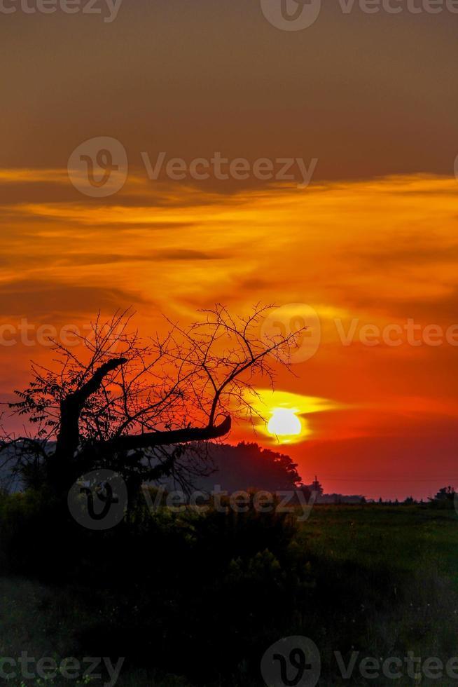 coucher de soleil arbre mort photo