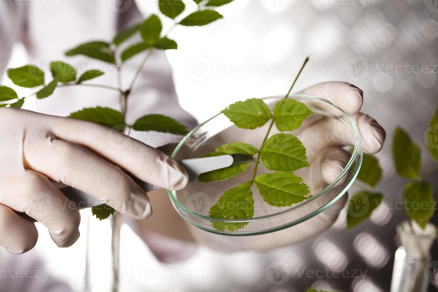 expérience scientifique avec laboratoire de plantes photo