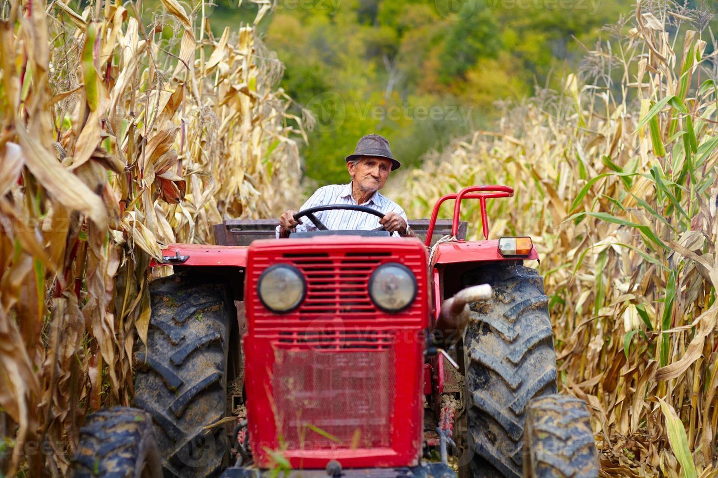 vieux fermier conduisant son tracteur dans le champ de maïs photo