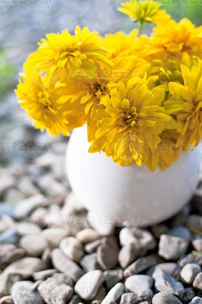 chrysanthème photo