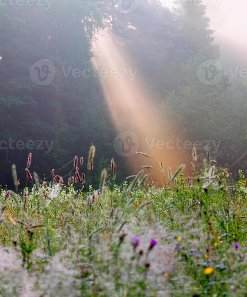 lever de soleil d'été photo