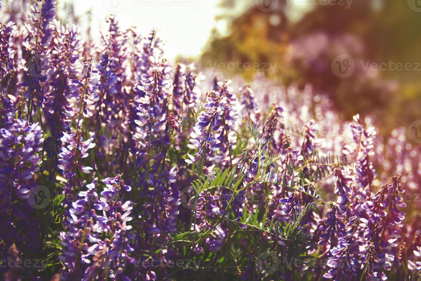 fleurs sauvages d'été photo