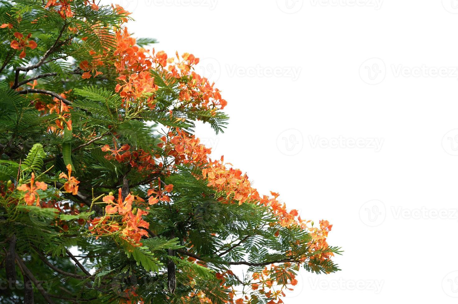 feuilles de printemps photo