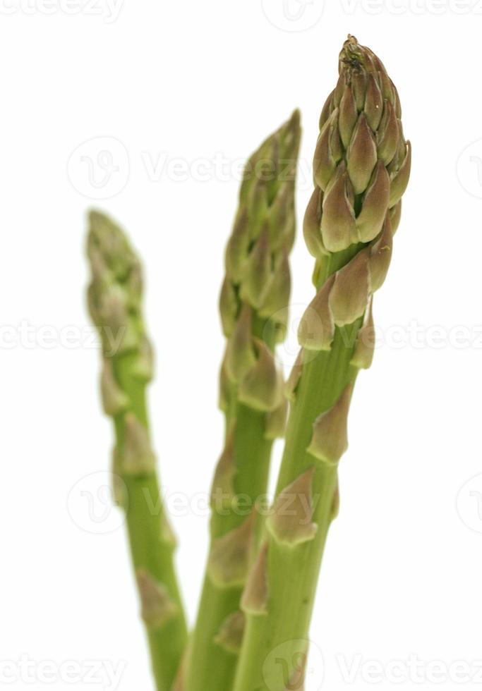 asperges vertes photo