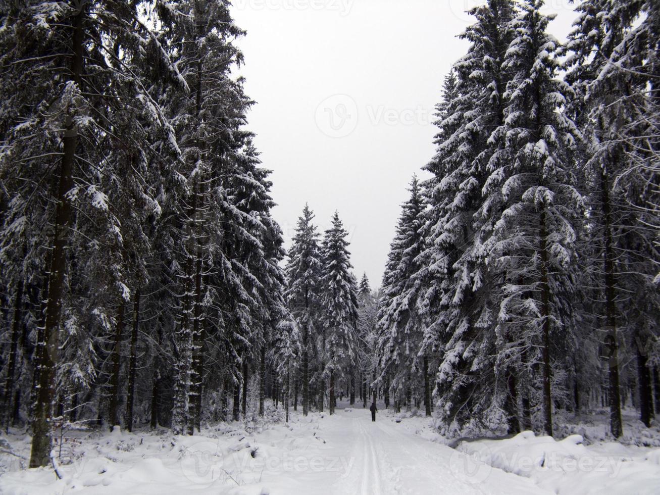paysage d'hiver. photo