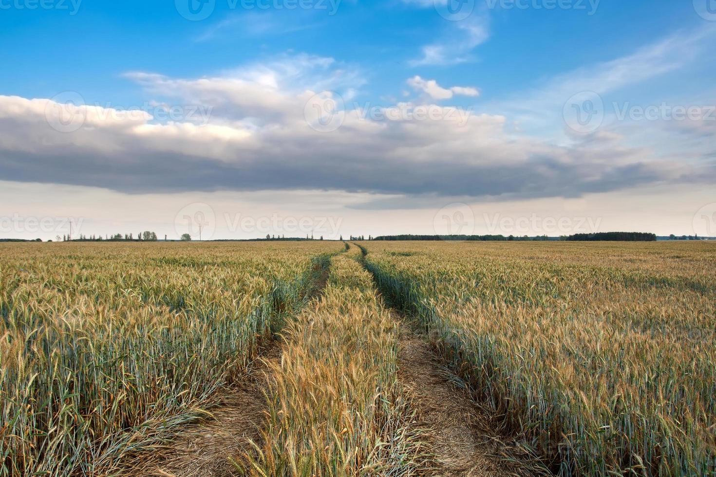 paysage de champ de printemps photo