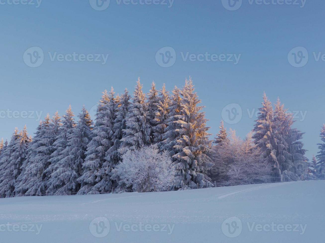paysage de neige hiver photo