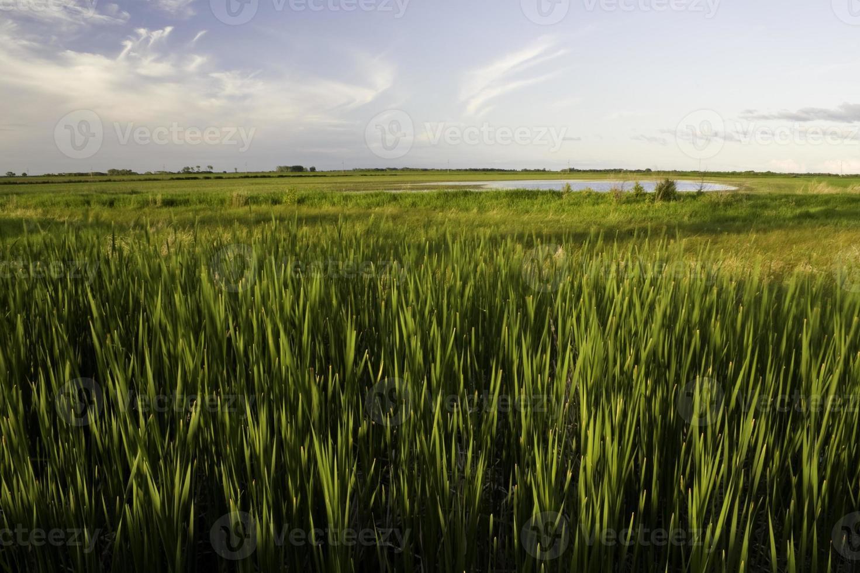 paysage de prairie photo