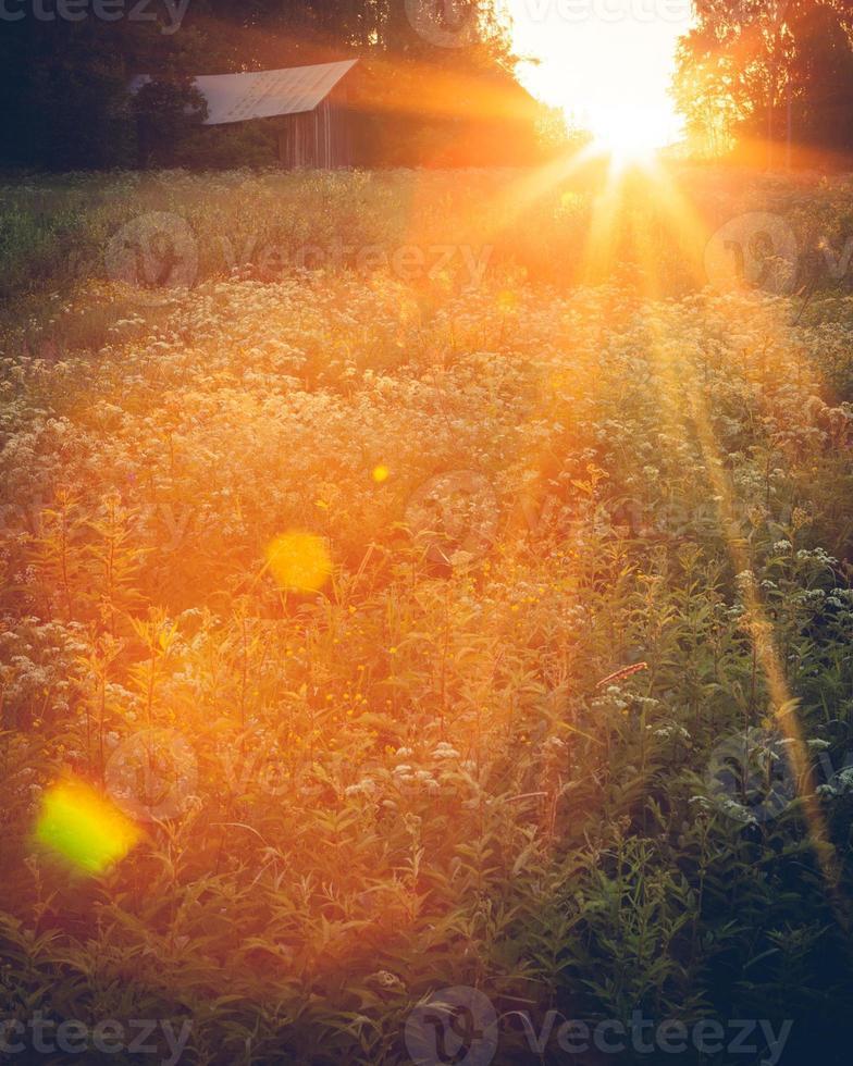 paysage de prairie au coucher du soleil photo