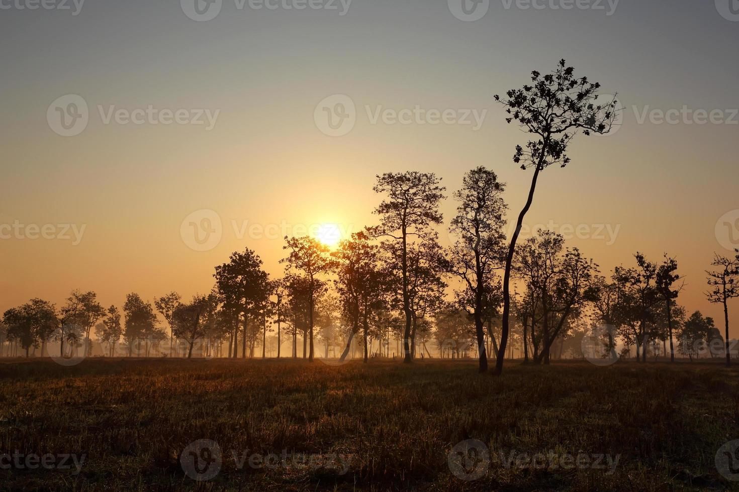 paysage dans la lumière du matin photo