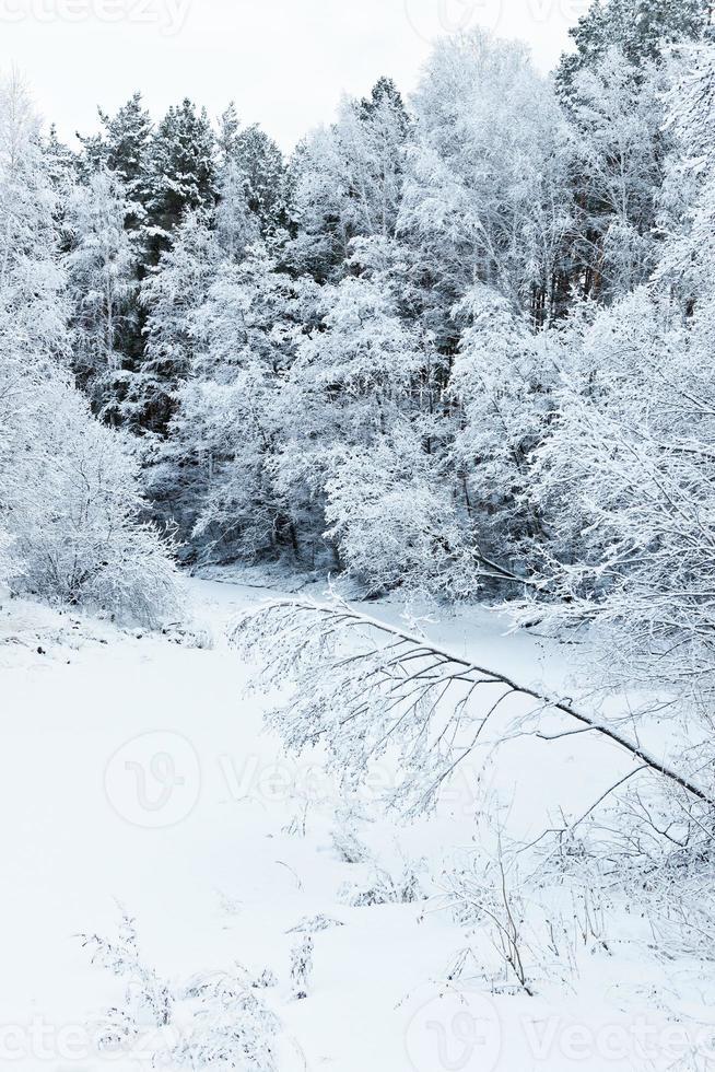arbres d'hiver sur la neige photo