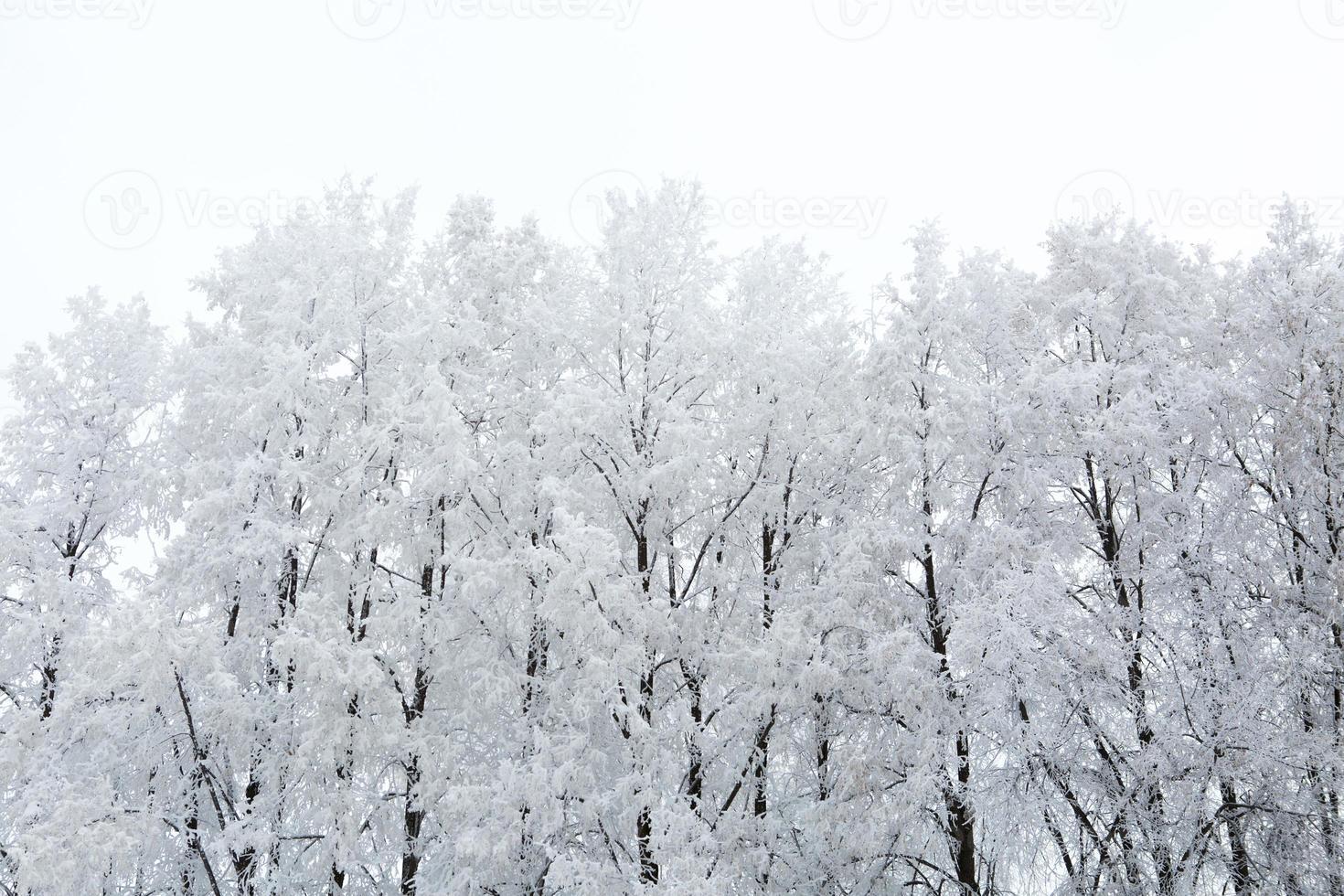 parc d'hiver dans la neige photo