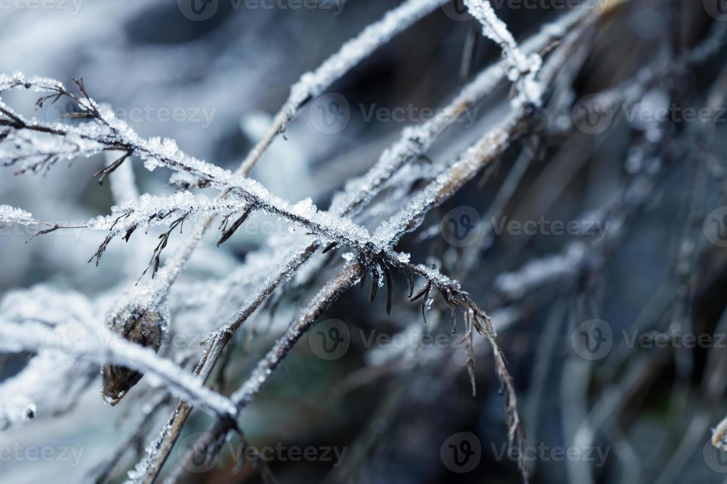 neige de l'hiver photo