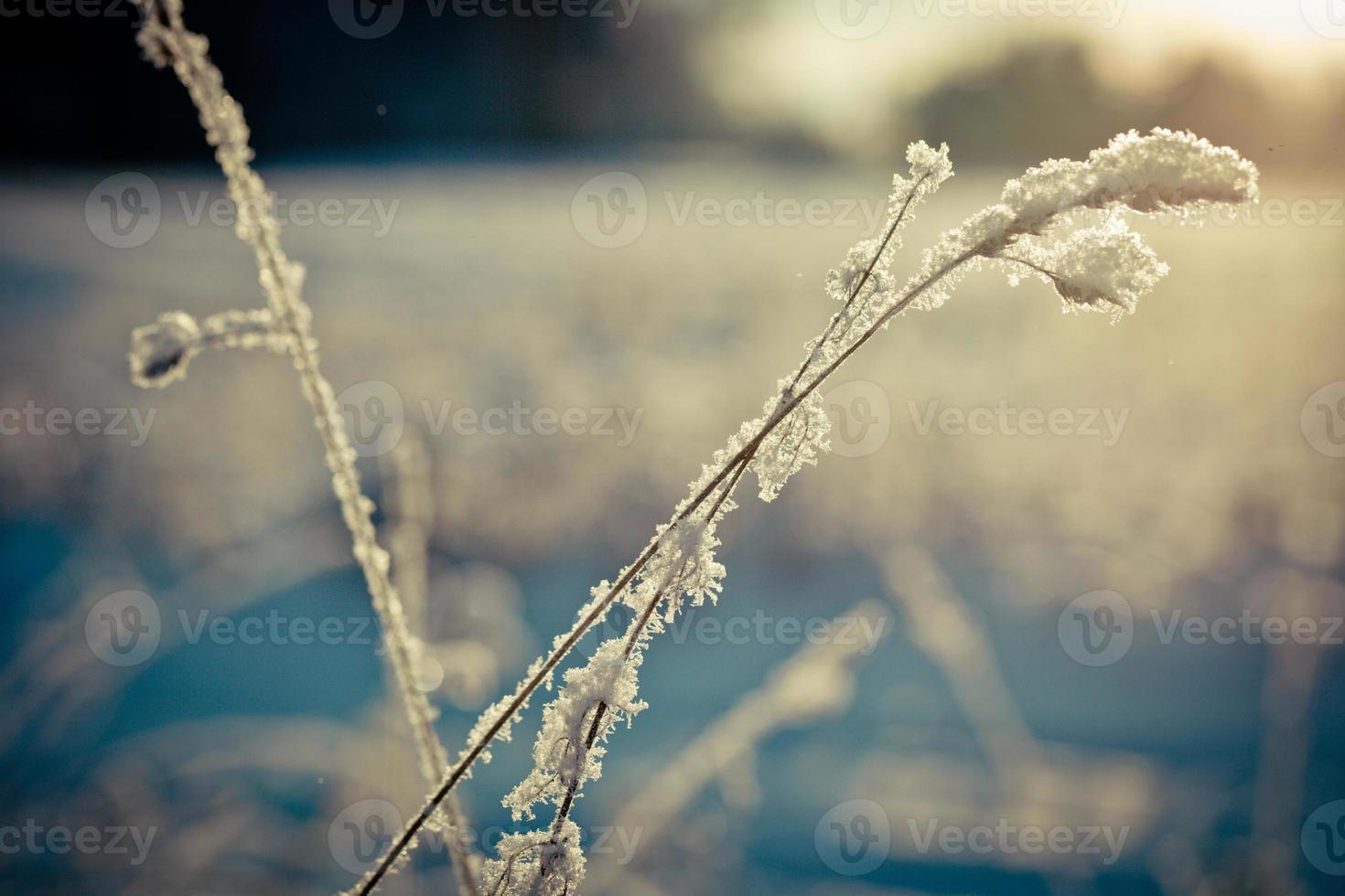 branche d'hiver recouverte de neige photo