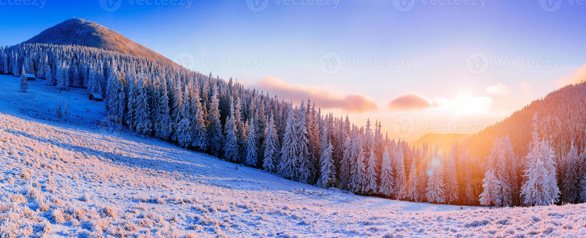 arbres de paysage d'hiver dans le gel photo