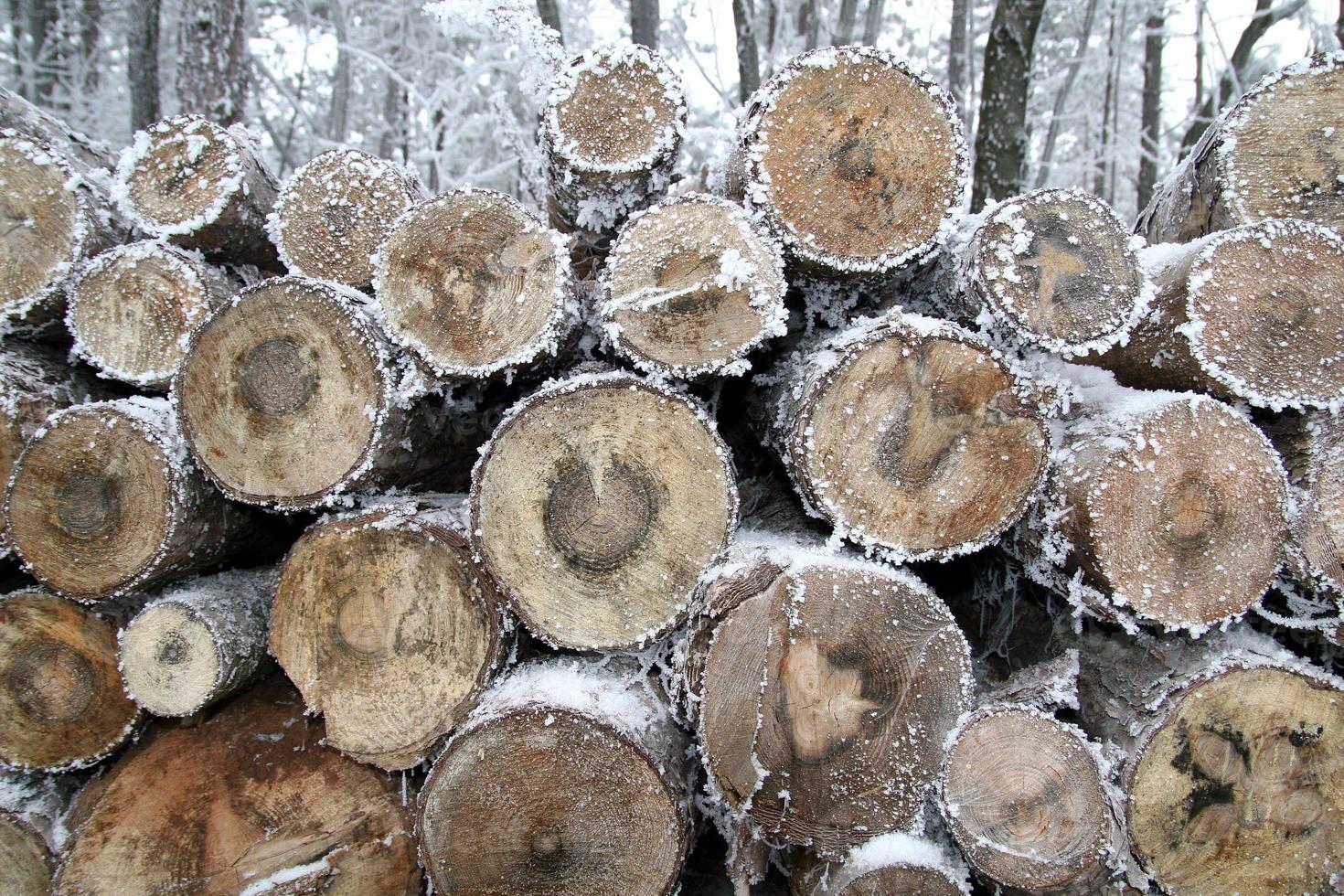 souche d'arbre en hiver. photo