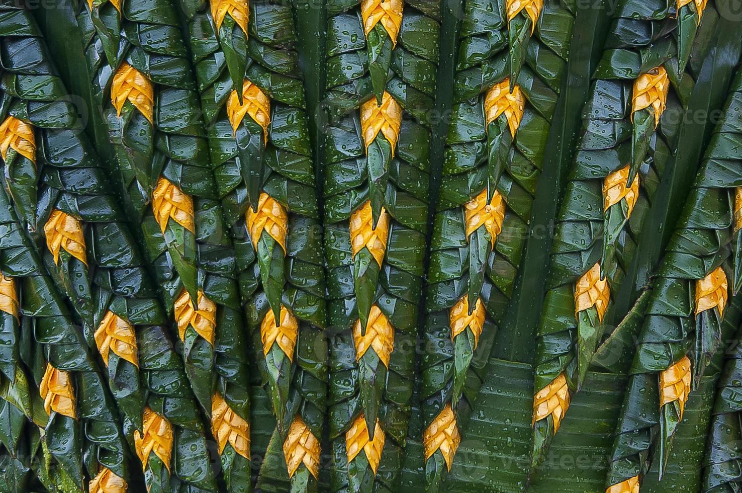feuille de banane photo