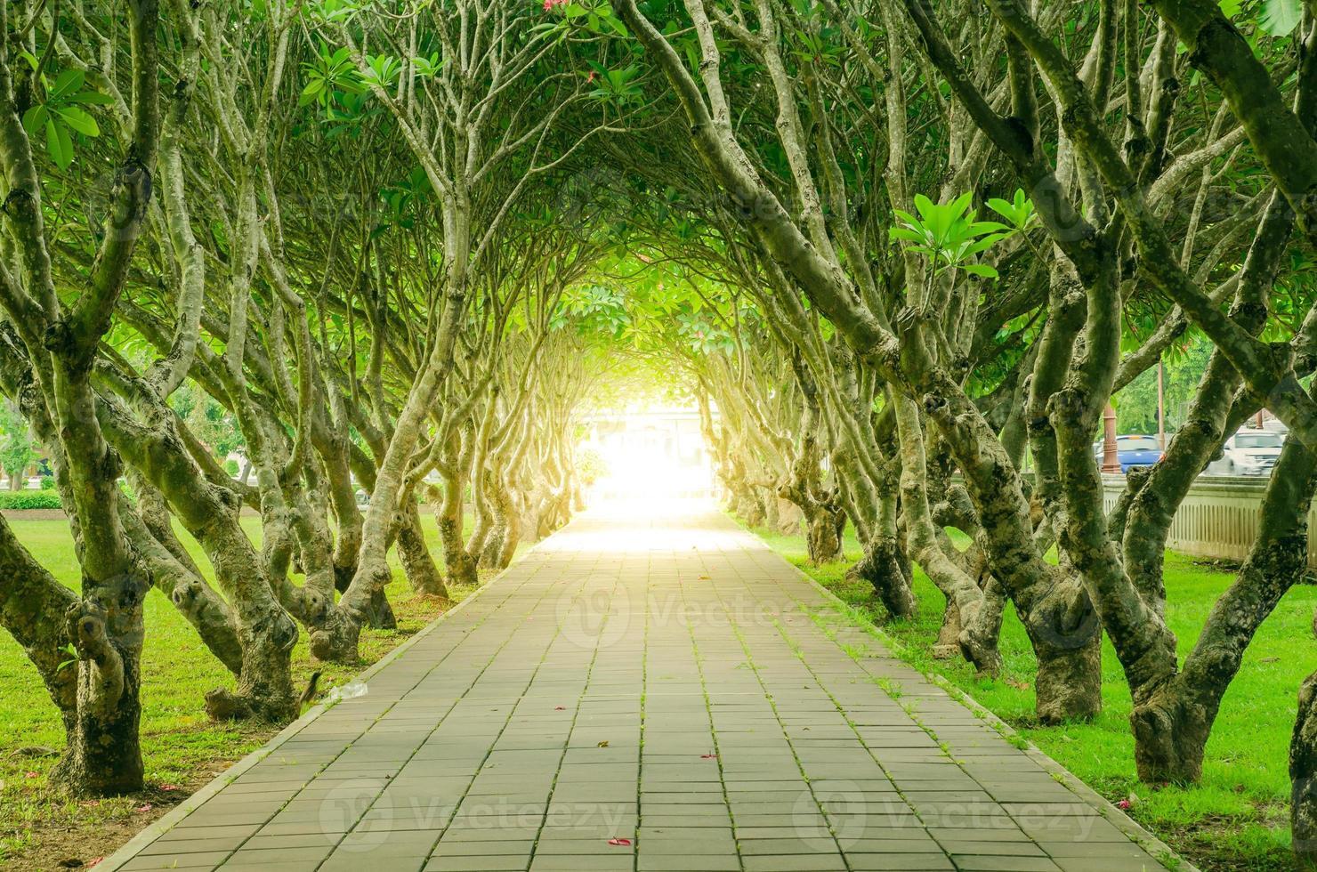 tunnel d'arbre et rose du désert photo