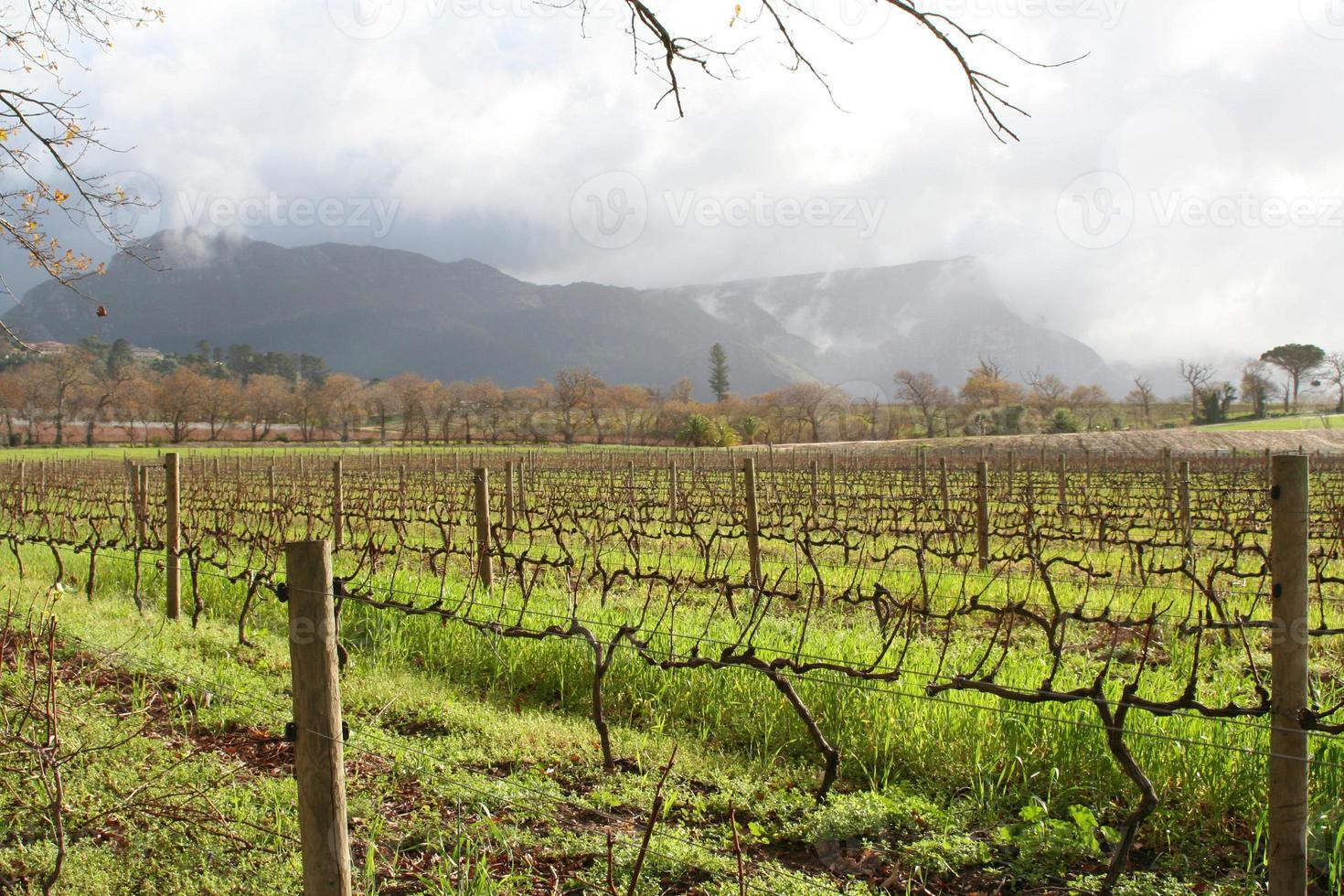 vignobles au soleil photo