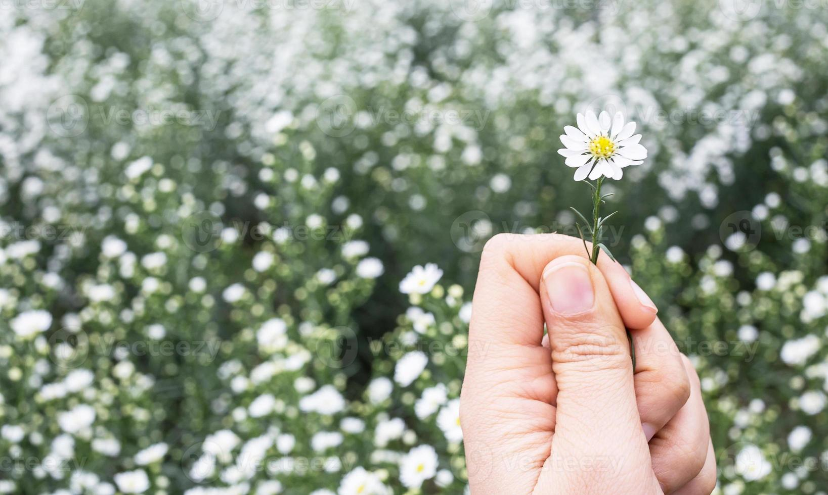 une main est carring fleur de coupe photo
