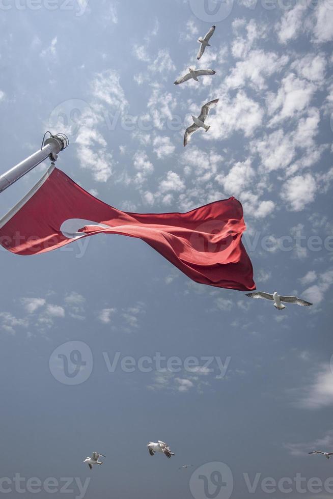mouettes volent au-dessus d'un drapeau turc photo