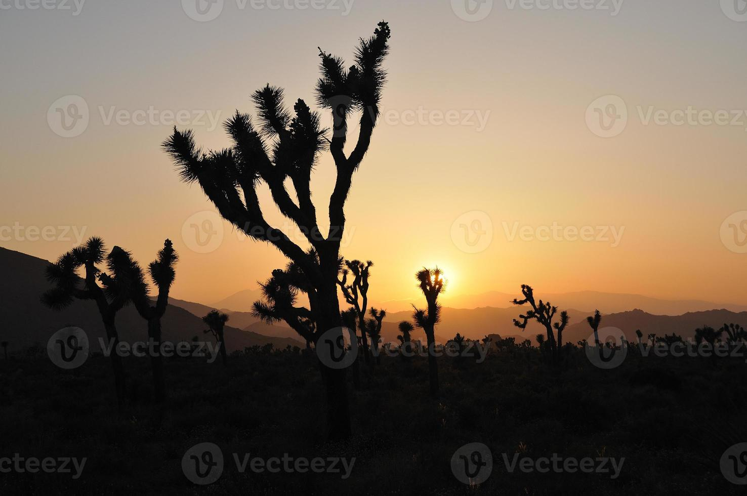 coucher de soleil arbre joshua photo