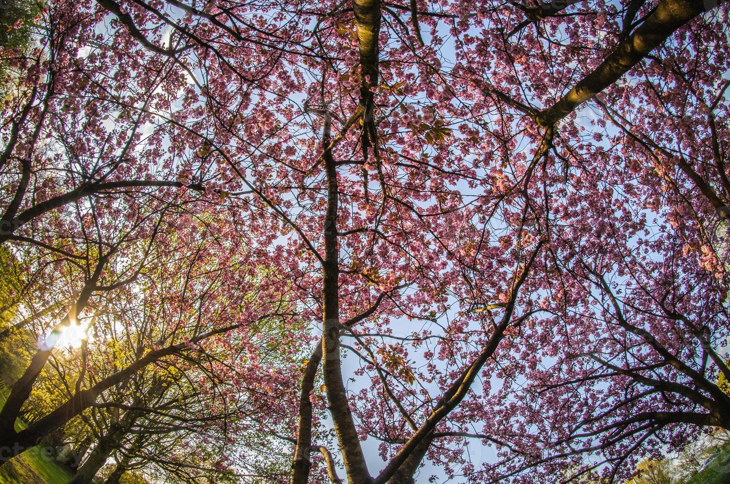 printemps à hambourg photo