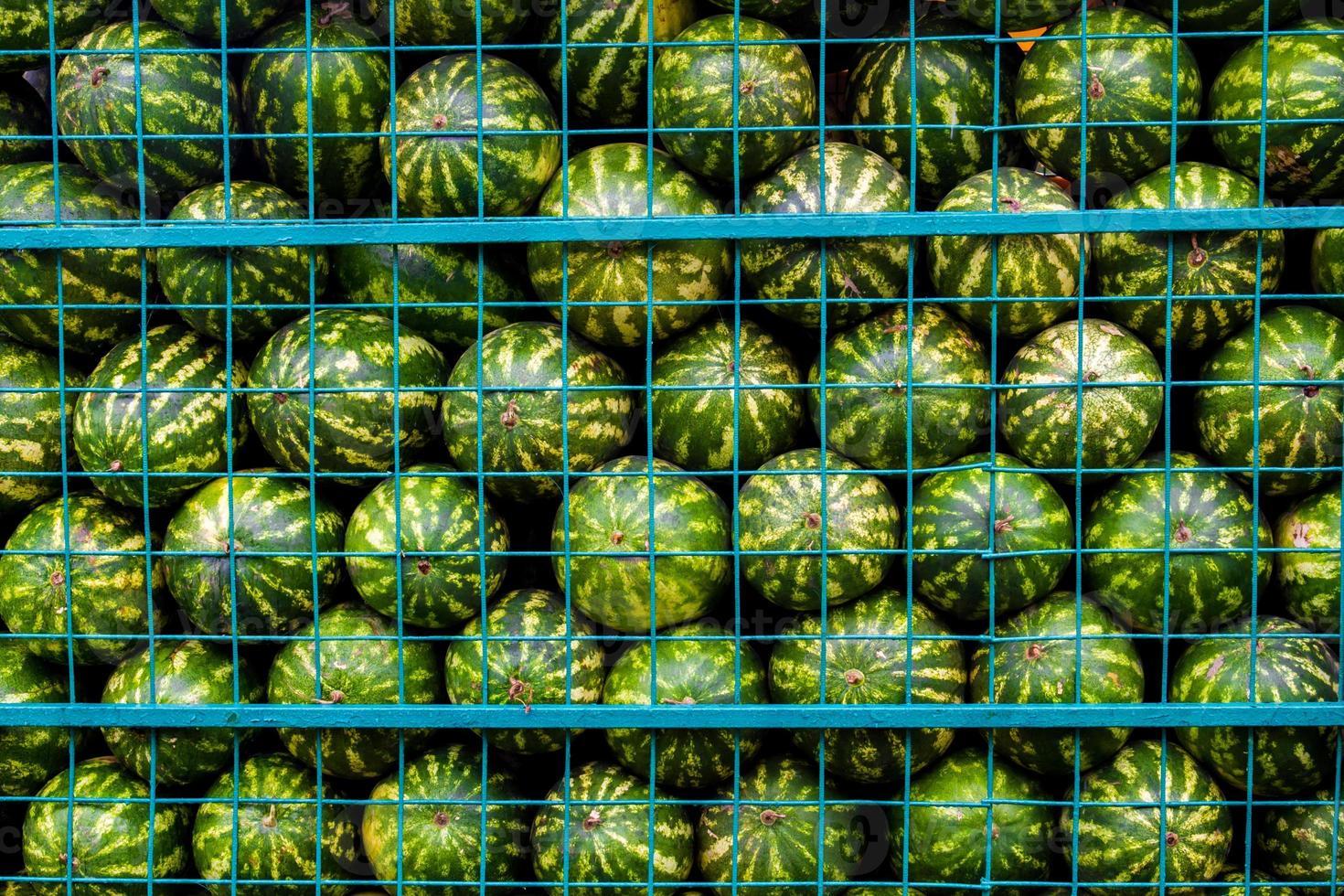pastèques vertes en cage photo