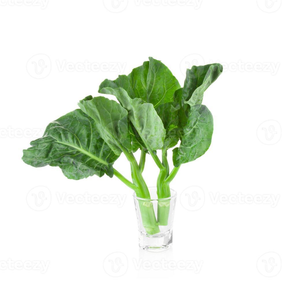 brocoli chinois sur fond blanc photo