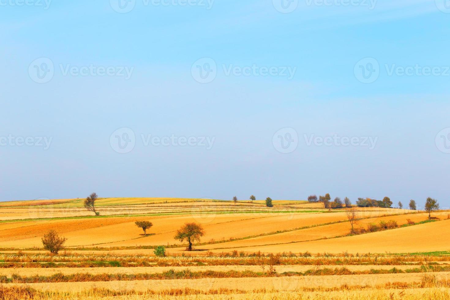 champ d'agriculteur photo