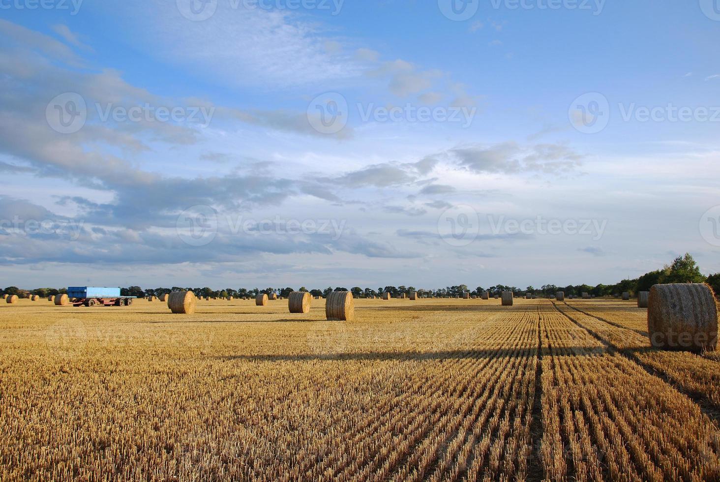 champ d'automne photo