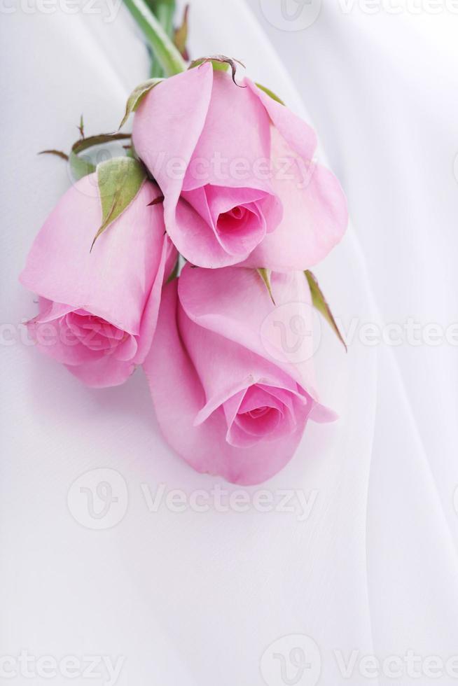 roses roses sur une soie blanche photo