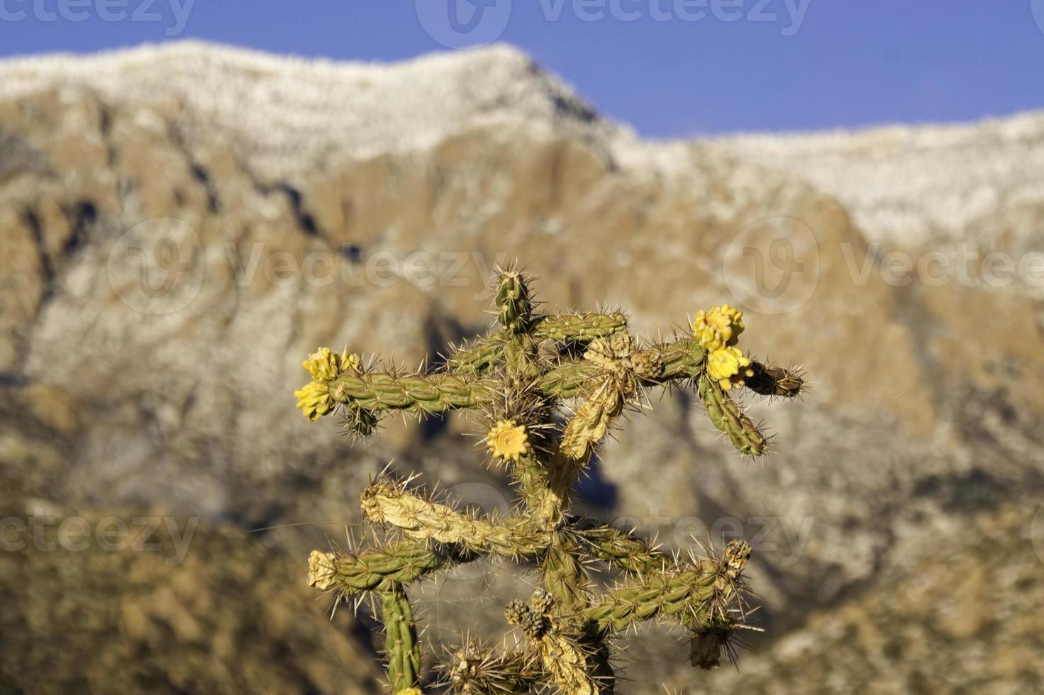 paysage de cactus d'hiver du sud-ouest photo