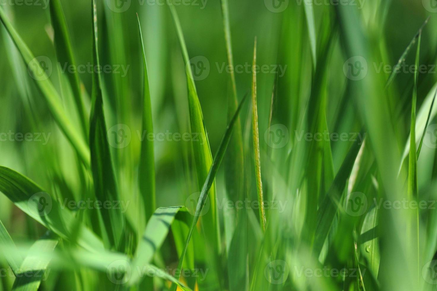 herbe photo