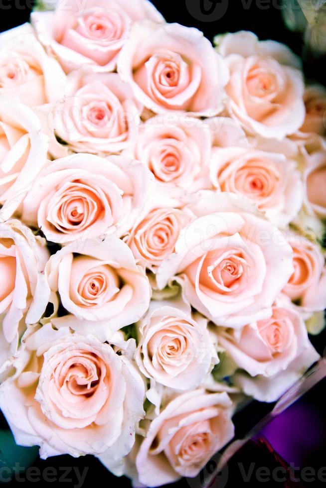 aimer les roses photo