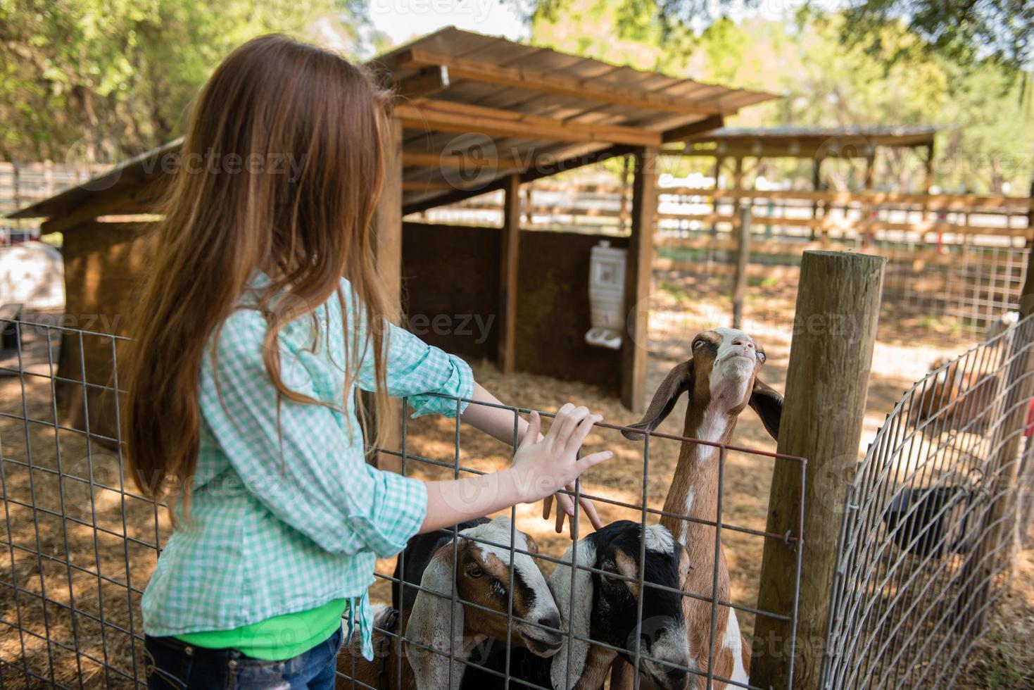 fille de ferme avec une chèvre photo
